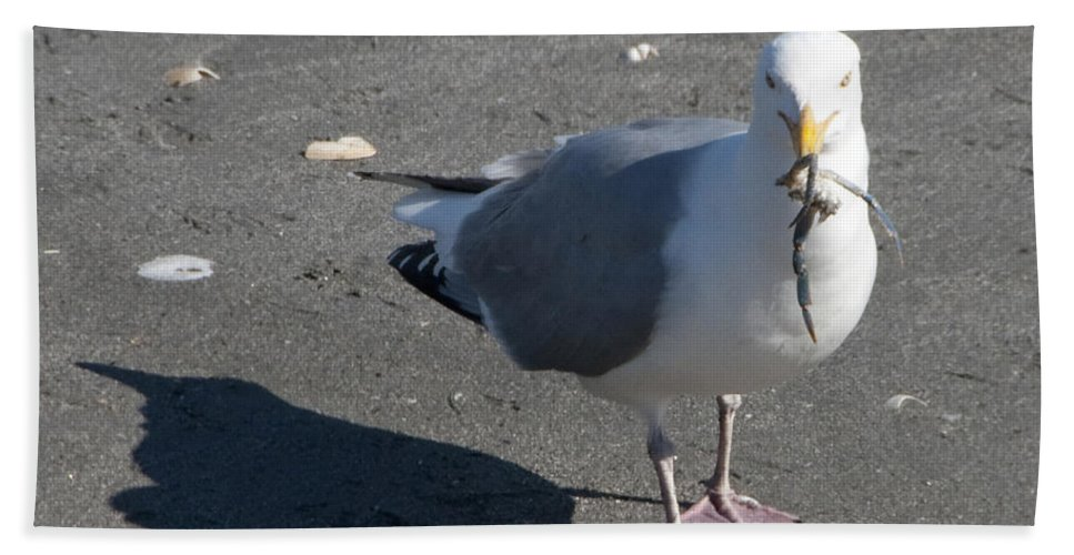 Seagull Beach Towel featuring the photograph Crab Plate by Steven Natanson