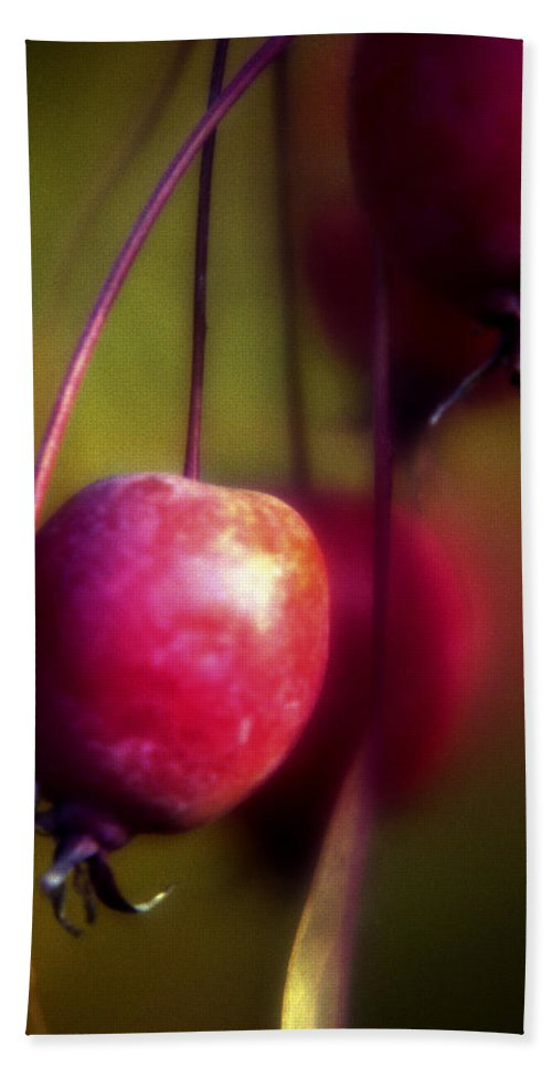 Macro Beach Sheet featuring the photograph Crabapple by Lee Santa