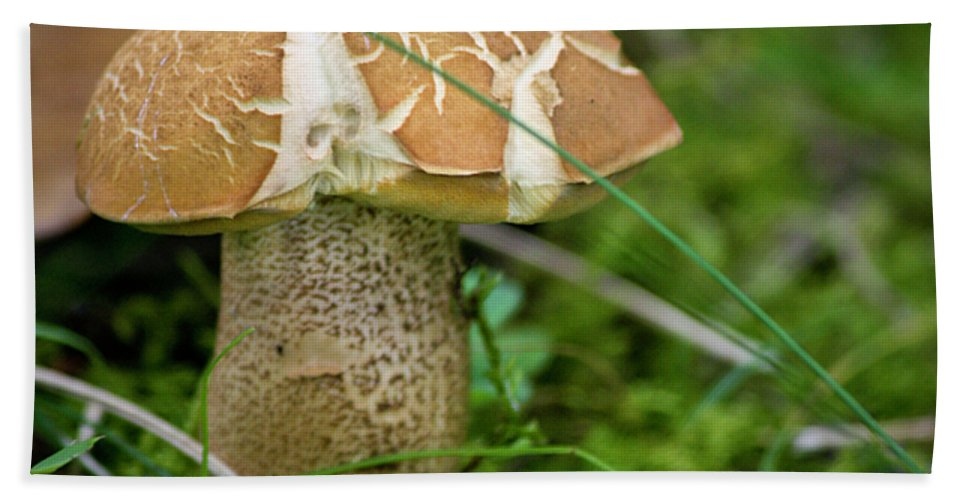 Fungus Beach Towel featuring the photograph Crackles Squared by Teresa Mucha