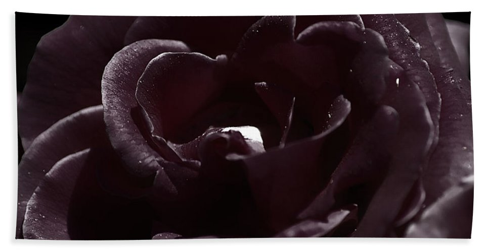 Clay Beach Towel featuring the photograph Cranberry Rose by Clayton Bruster