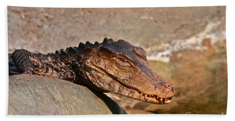 Gator Beach Towel featuring the photograph Croc by Rick Monyahan