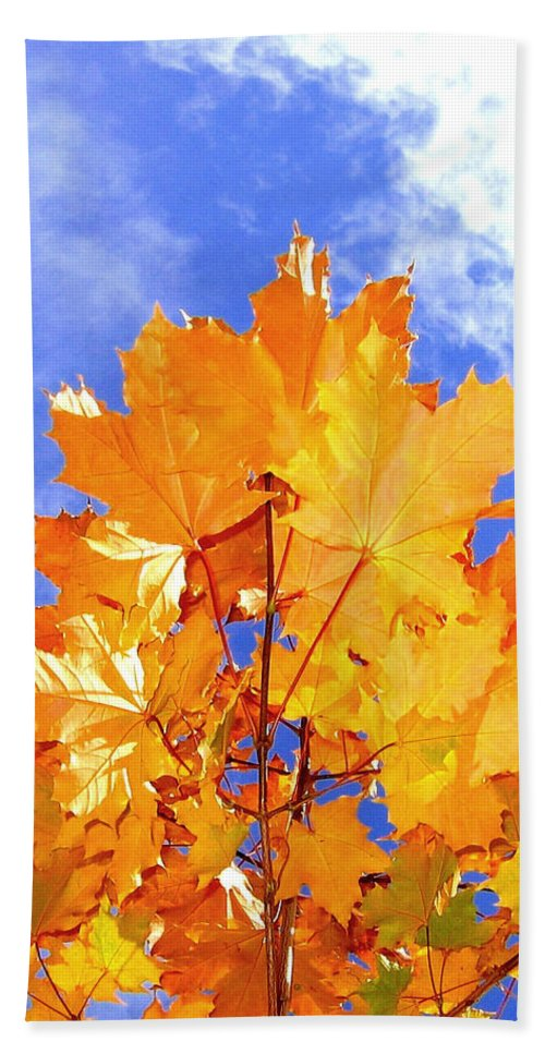 Maple Leaves Beach Towel featuring the photograph Crown Of Gold by Will Borden