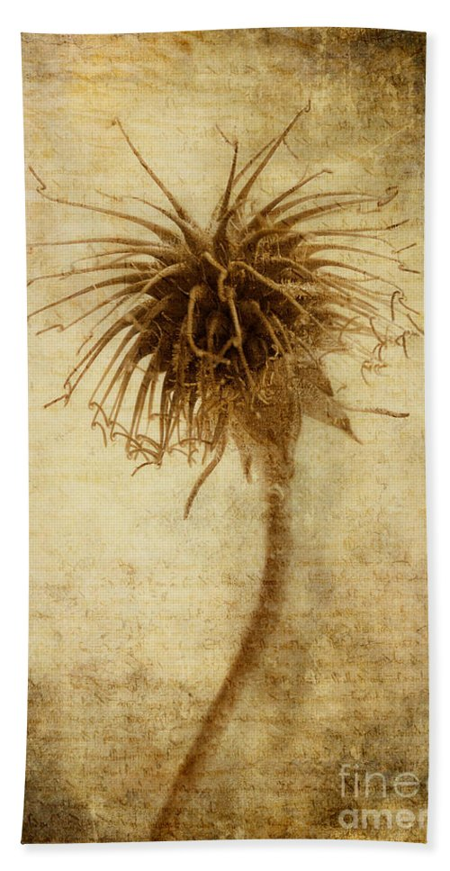 Seed Head Beach Towel featuring the photograph Crown Of Thorns by John Edwards