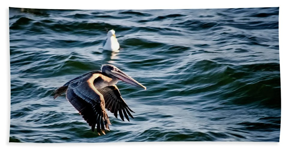 Brown Pelican Beach Towel featuring the photograph Cruising by Albert Seger