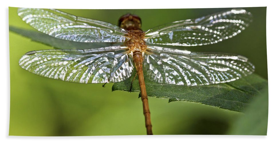 Bug Beach Towel featuring the photograph Crystal Wings by Evelina Kremsdorf