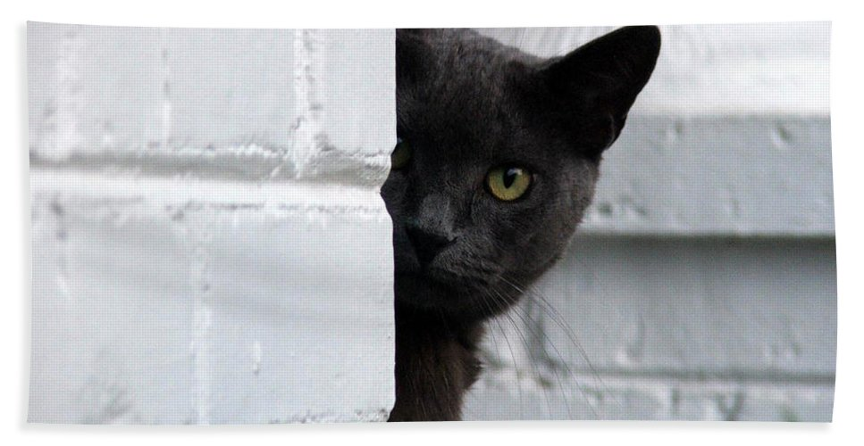 Cats Beach Towel featuring the photograph Curiosity by Robert Meanor