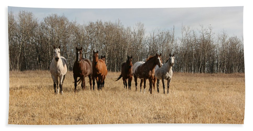 Horses Herd Animals Ranch Cowboy Appaloosa Quarter Horse Mares Pasture Field Grass Beach Towel featuring the photograph Curious Horses by Andrea Lawrence