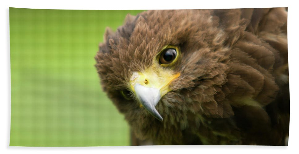 Bird Of Prey Beach Towel featuring the photograph Curious One by Angel Ciesniarska