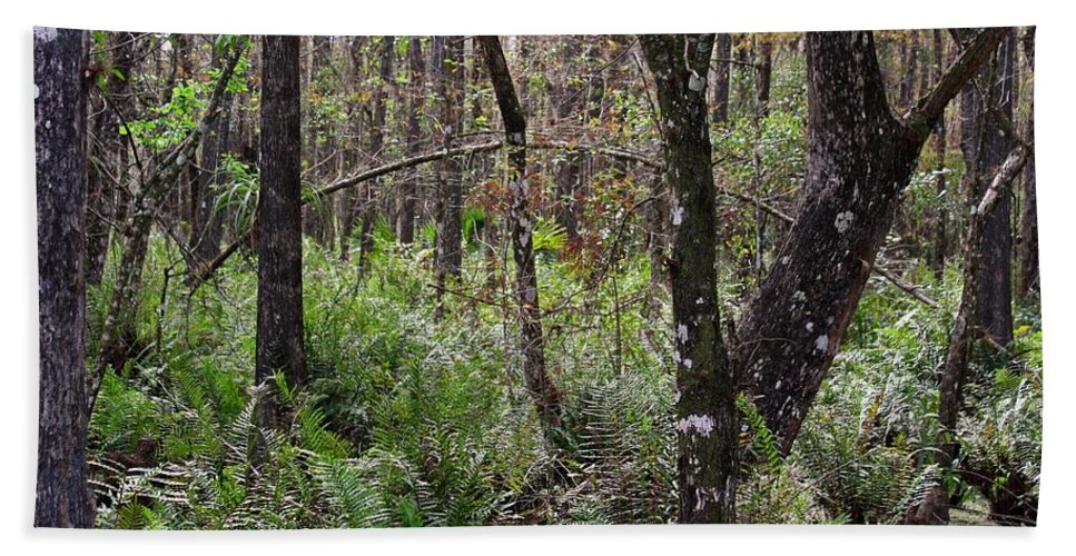 Six Mile Cypress Slough Beach Towel featuring the photograph Cypress Arch by Michiale Schneider