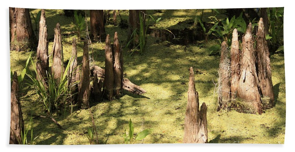 Swamps Beach Towel featuring the photograph Cypress Knees In Green Swamp by Carol Groenen