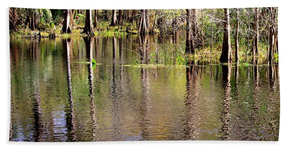 Cypress Trees Beach Towel featuring the photograph Cypress Trees Along The Hillsborough River by Carol Groenen