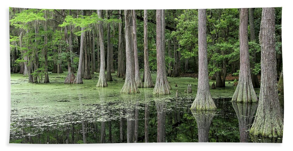 Trees Beach Towel featuring the photograph Cypresses In Tallahassee by Carol Groenen