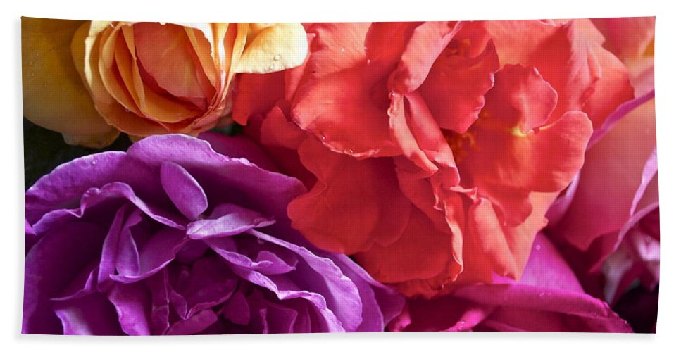 Rose Beach Towel featuring the photograph Dad's Roses by Gwyn Newcombe