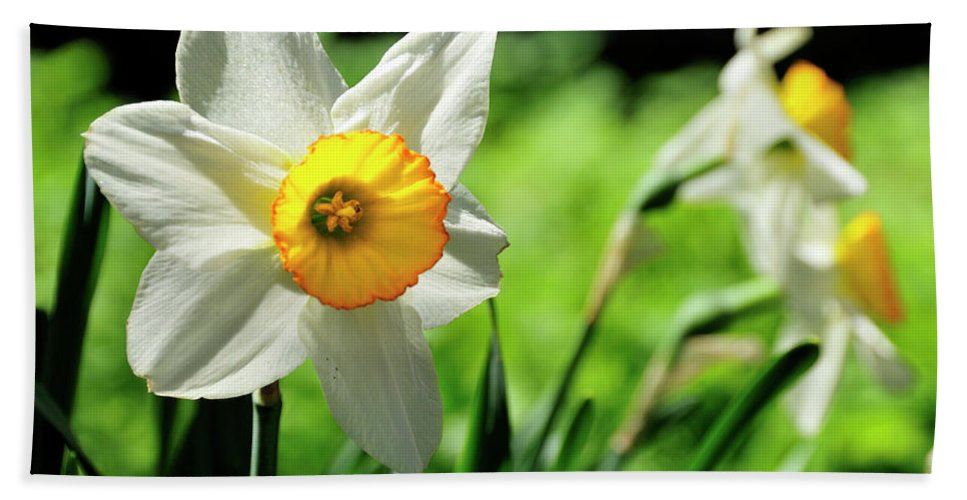 Flower Beach Towel featuring the photograph Daffodil by David Arment