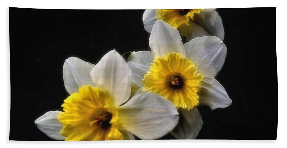 Daffodils Beach Towel featuring the photograph Daffodil Dream by James DeFazio