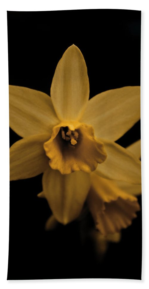 Flower Beach Towel featuring the photograph Daffodils by Danielle Silveira