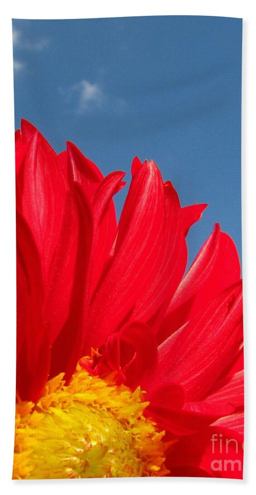 Dahlia Beach Towel featuring the photograph Dahlia by Amanda Barcon