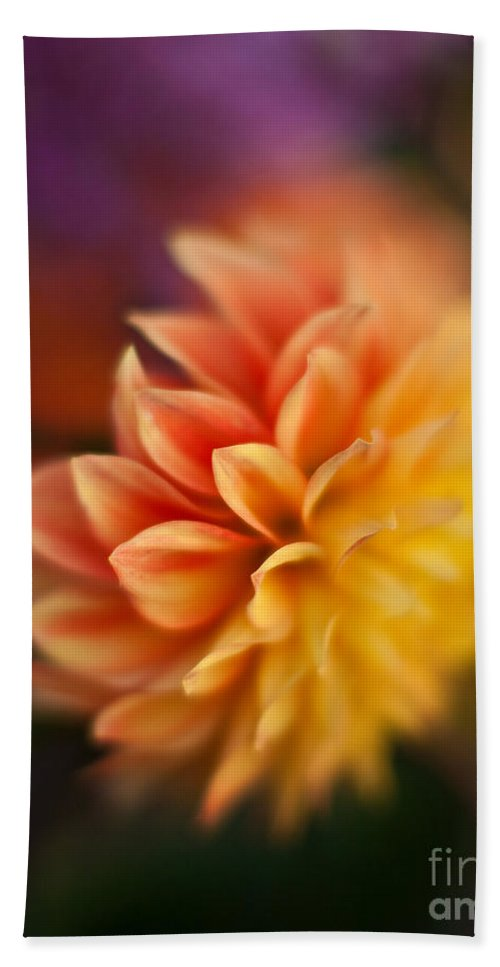 Dahlia Beach Towel featuring the photograph Dahlia Fireball by Mike Reid