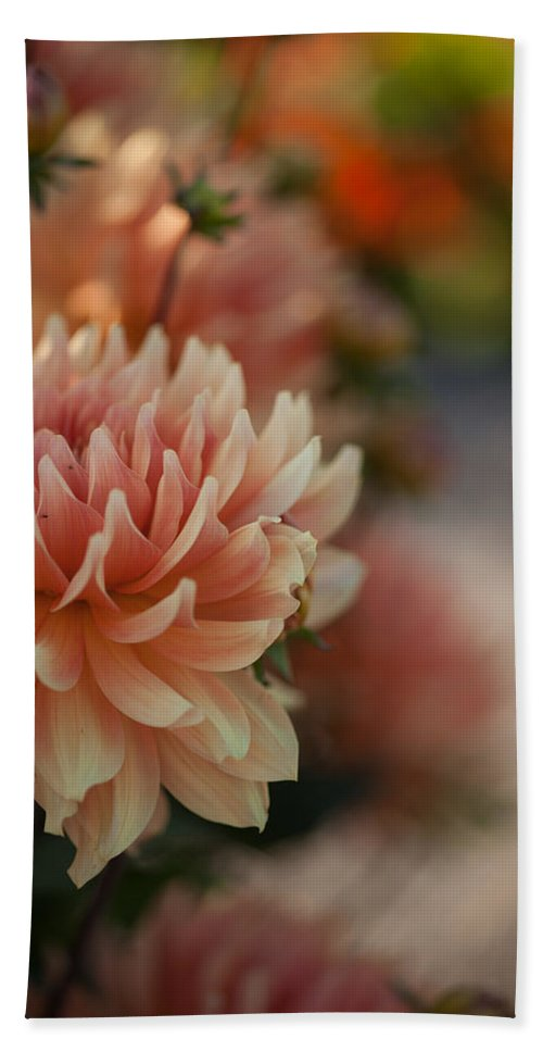 Flower Beach Towel featuring the photograph Dahlias Season by Mike Reid