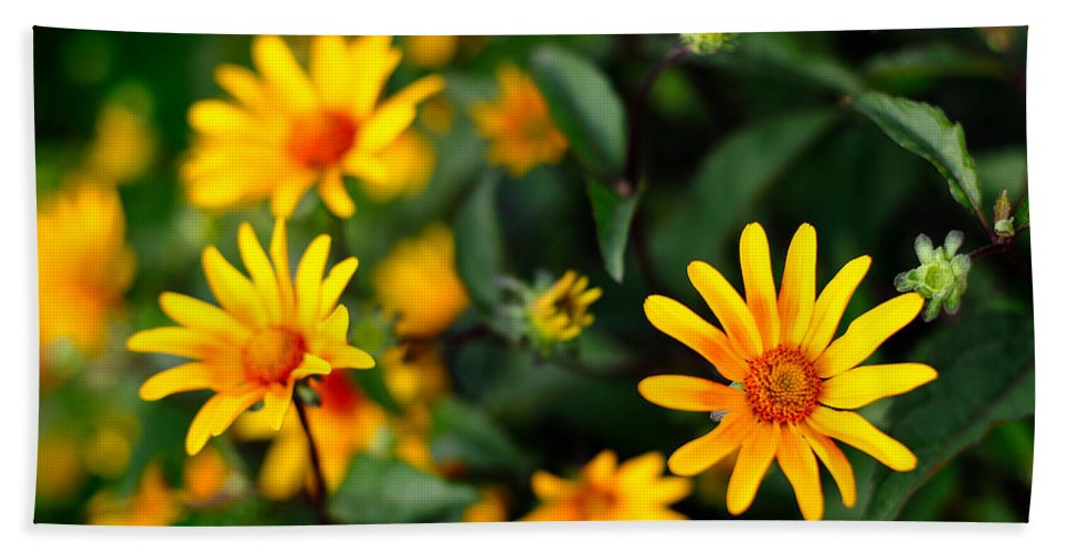 Yellow Beach Towel featuring the photograph Daisies by Todd Klassy