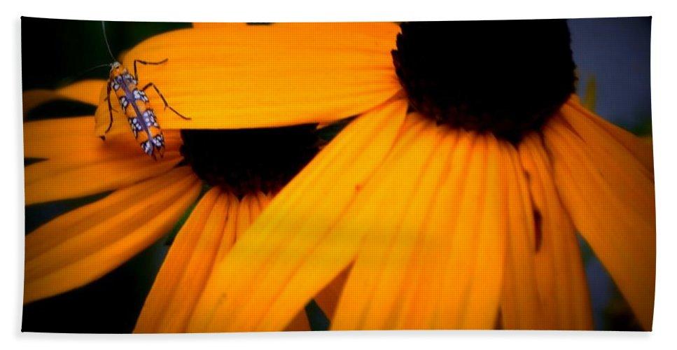 Daisy Beach Towel featuring the photograph Daisy Bug by Anella Harmeyer