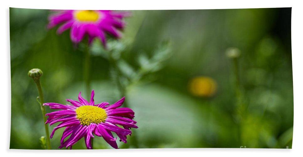 Garden Flower Beach Towel featuring the photograph Daisy by David Arment