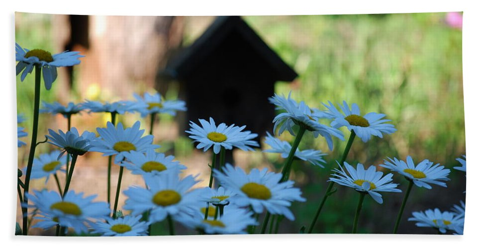 Daisy Beach Towel featuring the photograph Daisy Garden by Lori Tambakis