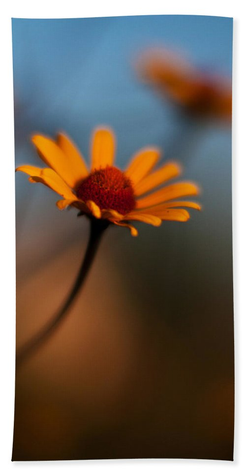 Daisy Beach Towel featuring the photograph Daisy Standout by Mike Reid
