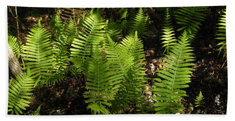 Ferns Beach Towel featuring the photograph Dancing Ferns by David Lee Thompson