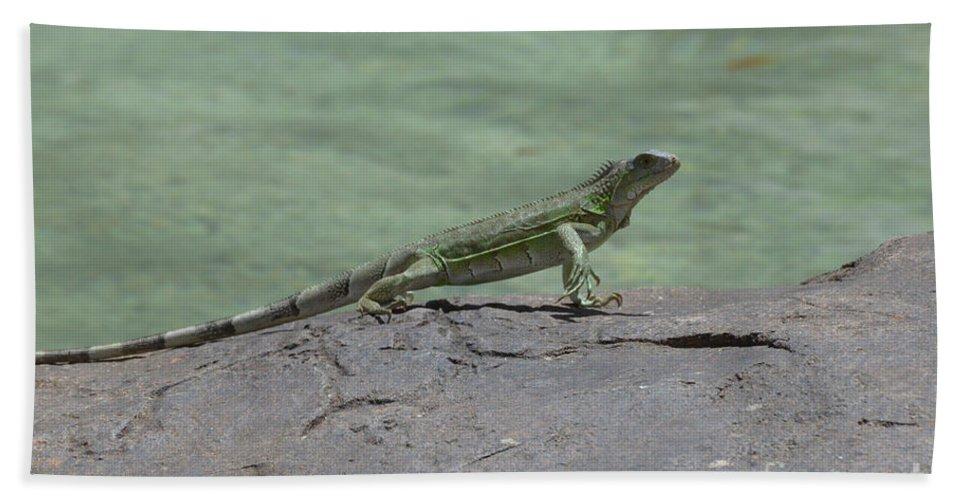 Iguana Beach Towel featuring the photograph Dancing Iguana On Rocks Along The Water's Edge by DejaVu Designs