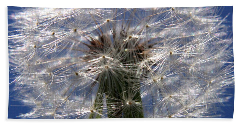 Dandelion Beach Towel featuring the photograph Dandelion by Ralph A Ledergerber-Photography