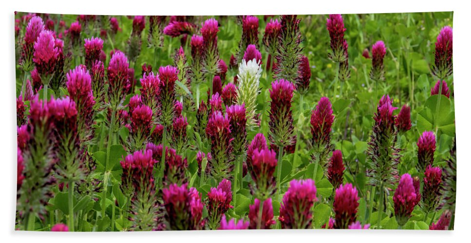 Crimson Clover Beach Towel featuring the photograph Dare To Be Different by Barbara Bowen