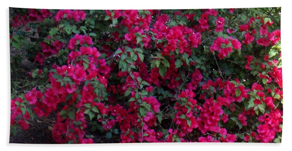 Dark Pink Flower Bush Amazing Nature Of California Beach Towel For