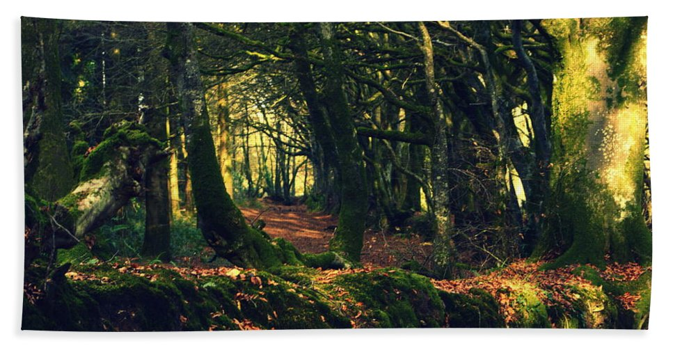 Trees Beach Towel featuring the photograph Dark Woods by Andy Thompson