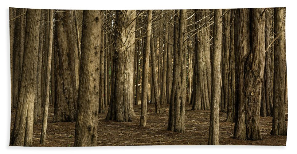 Landscape Beach Towel featuring the photograph Dark Woods by Javier Flores
