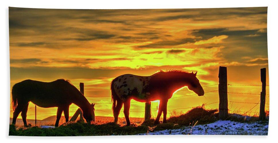 Dawn Beach Towel featuring the photograph Dawn Horses by Fiskr Larsen