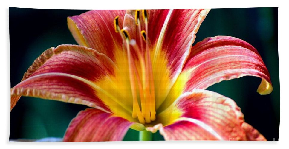 Landscape Beach Towel featuring the photograph Day Lilly by David Lane