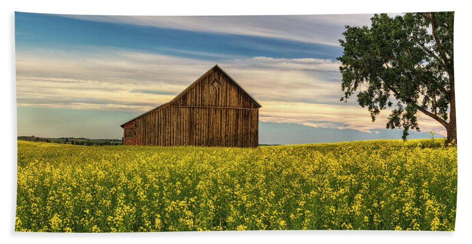 Canola Beach Towel featuring the photograph Dazzling Canola In Bloom by Mark Kiver