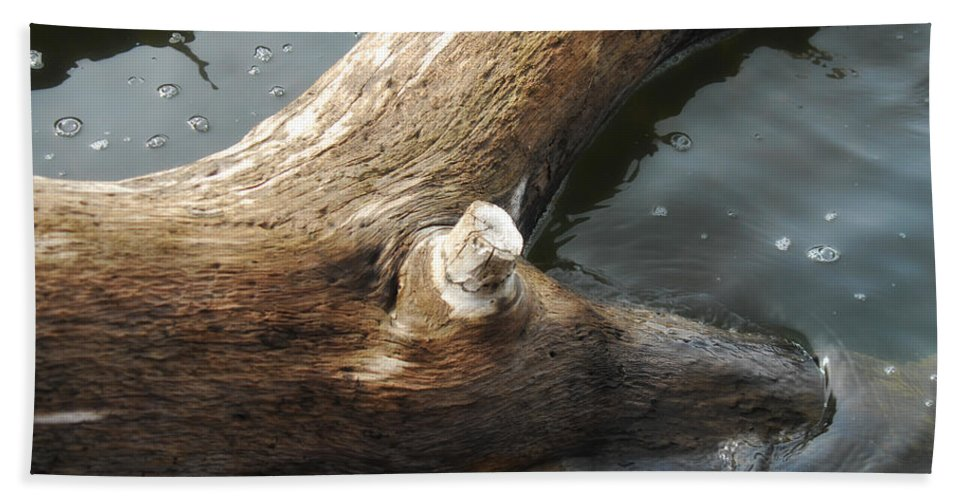 Wood Beach Towel featuring the photograph Dead Wood by Donna Blackhall