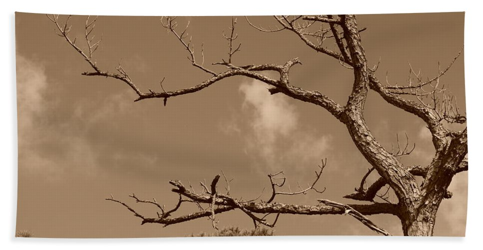 Sepia Beach Sheet featuring the photograph Dead Wood by Rob Hans