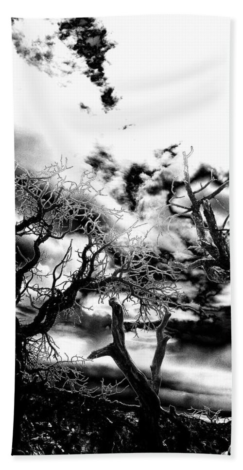 Tree Beach Towel featuring the photograph Deadwood by Charleen Treasures