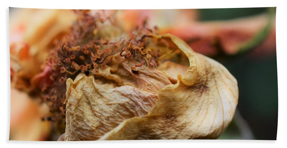 Macro Lens Beach Towel featuring the photograph Decay by Steve Sharpe