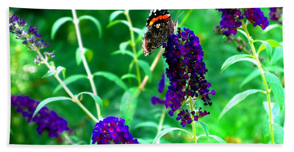 Butterfly Bush Beach Towel featuring the photograph Decisions... by Brittany Horton