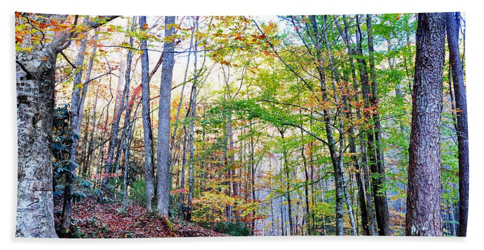 Smokey Mountain Beach Towel featuring the photograph Deep In The Forest by Brittany Horton