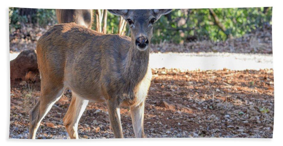 Deer Beach Towel featuring the photograph Deer Doe - 1 by Alan C Wade