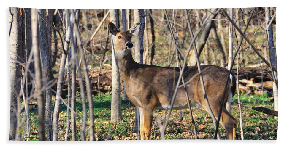 Deer Beach Towel featuring the photograph Deer Early Spring by David Arment