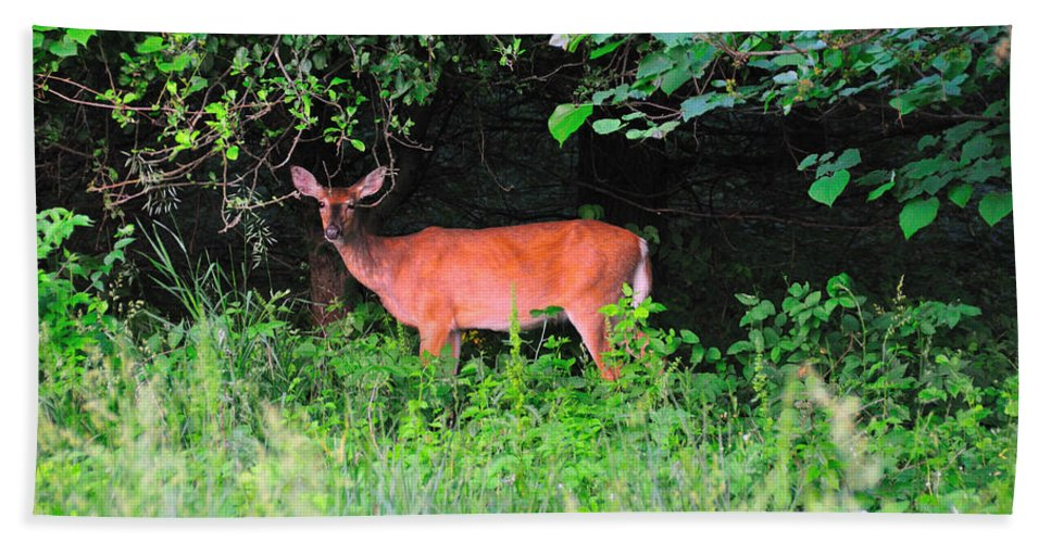 Animals Beach Towel featuring the photograph Deer In Overhang Of Trees by David Arment