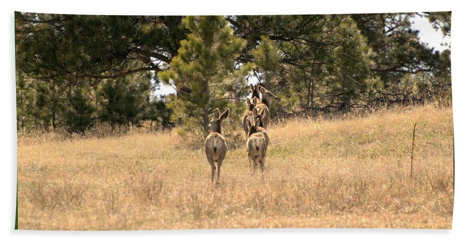 Deer Beach Towel featuring the photograph Deer Tails by Wendy Fox