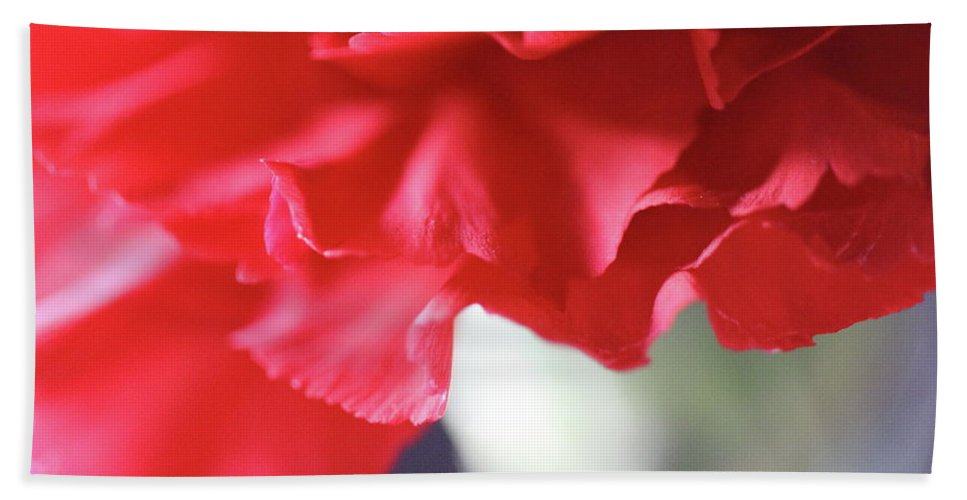 Carnation Beach Towel featuring the photograph Delicate Carnation by Angela Murdock