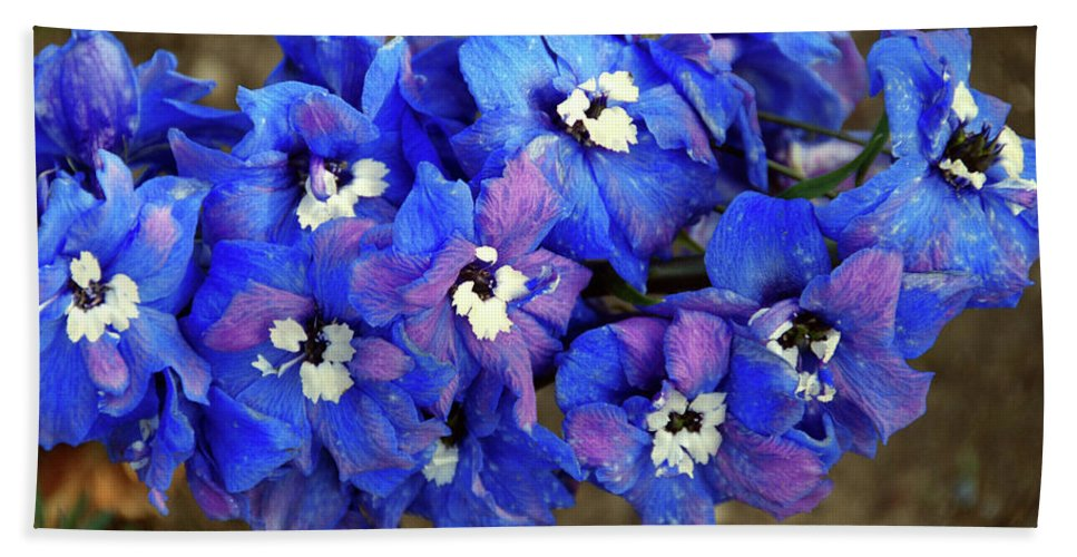 Beach Towel featuring the photograph Delphinium by Christine Dellosso